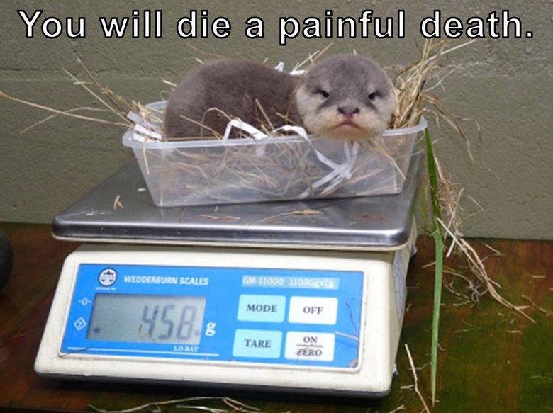 Grumpy Otter 2. . baby otter kill Cute Grumpy Angry