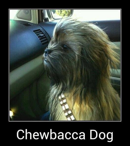 Gwaaaaaaaaaaaaaaarrrrrggggllll!. . Chewbacca Dog