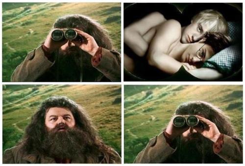 Hagrid. .