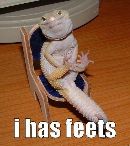 Happy Lizard Is Happy. .