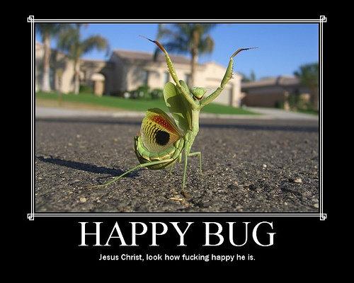 Happy Bug. Happy Bug is Happy. has us Christ, In Mt haw Ag ha pm he is.. Happy bug is happy :D motivational posters happy Bug