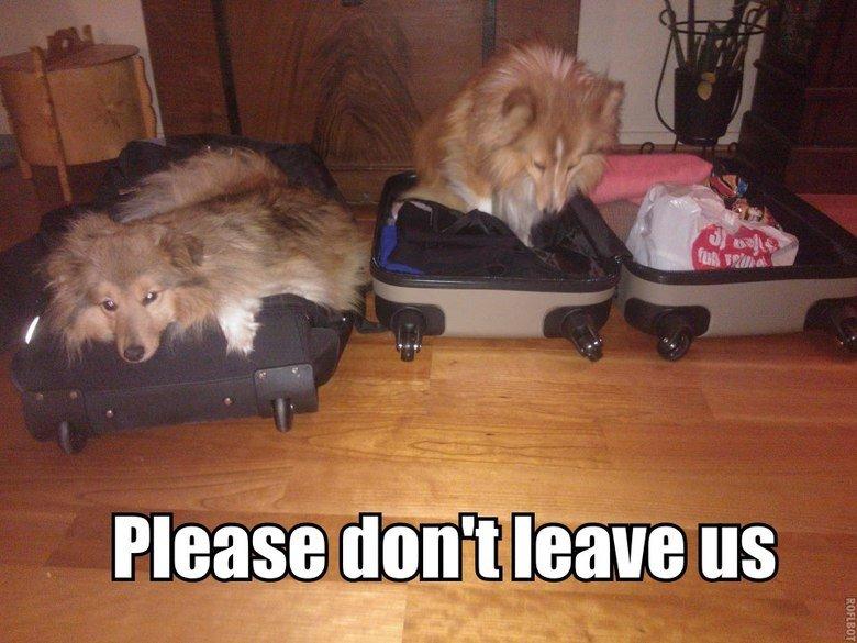 Hard to leave. OC, my dogs. hah L ad El A tll Eid arm r,.