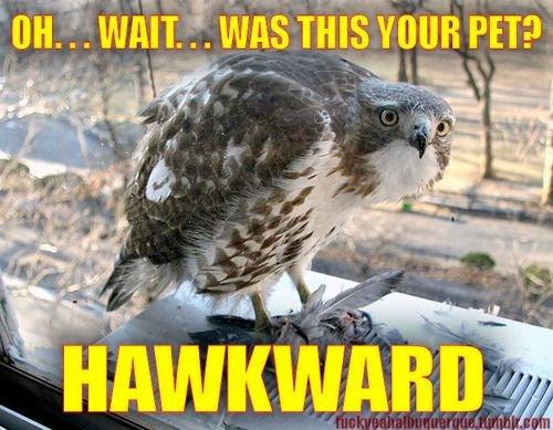 Hawkward_bde677_597681.jpg