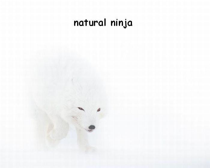 he's a natural. nuff said. natural ninja
