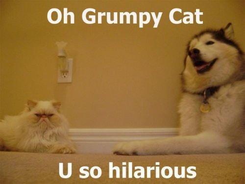 heh. . Oh Grumpy Cat U so hilarious. input Joe Swanson's voice