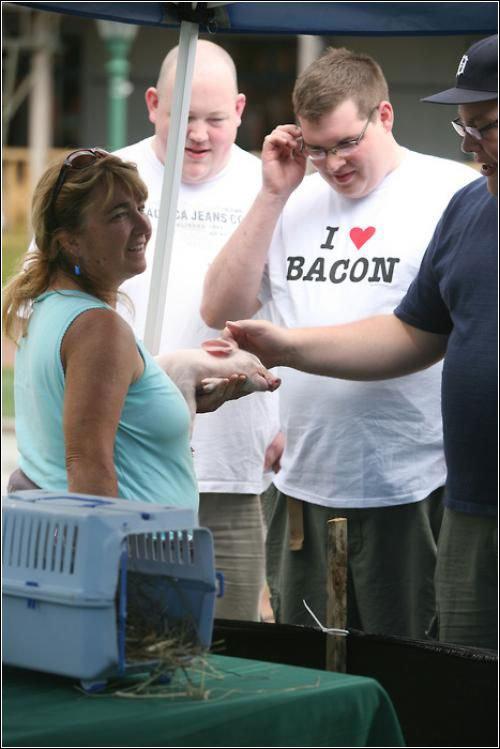 Here Piggy. .