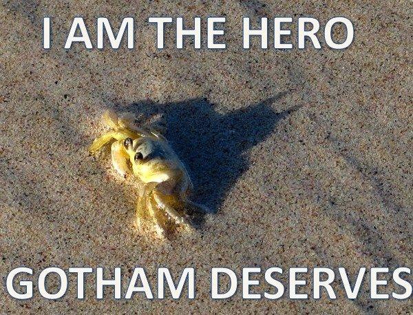 HERO. Why even read this. GOTHAMS ES... awwwwwwww i Got crabs