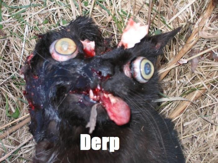 Herp. .. just no cat