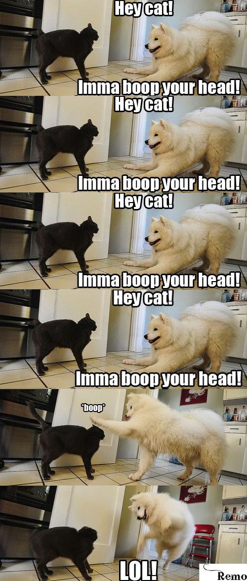 Hey Cat!. tags are ninjas. ea I