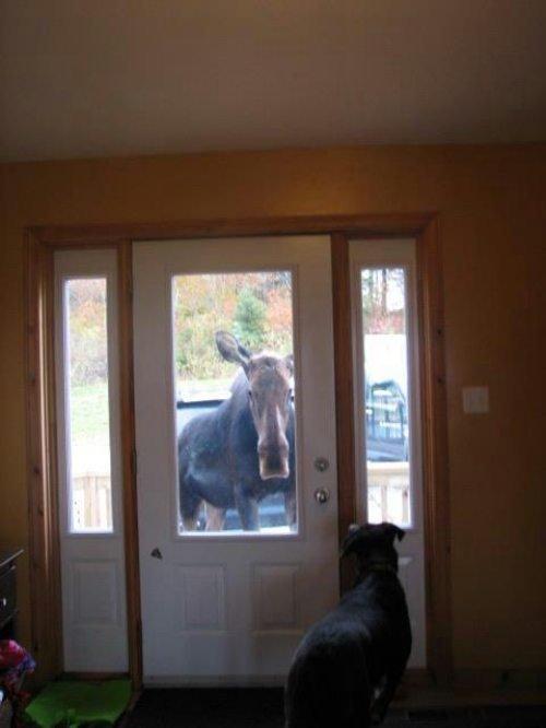 Hey, look Canada is at the door. .