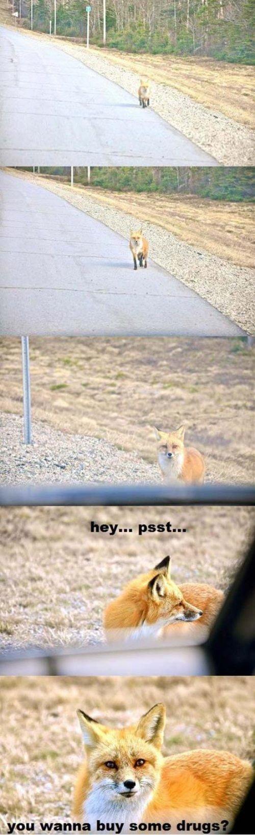 Hey...psst. .. That depends. Do you wanna do a barrel roll?