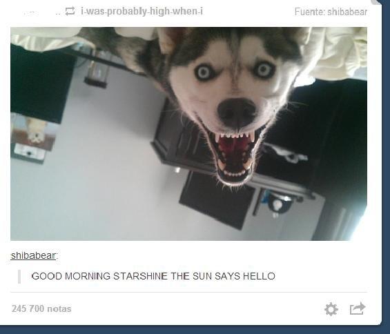 HI HUMAN. . GOOD MORNING STARSHINE THE SUN SAYS HELLO