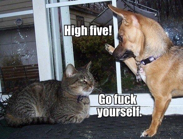 high five. .