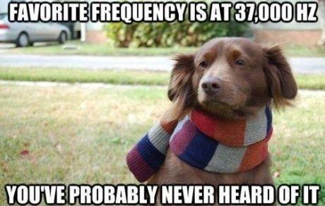 Hipster Dog. .