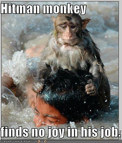 hitman monkey. he is sad.