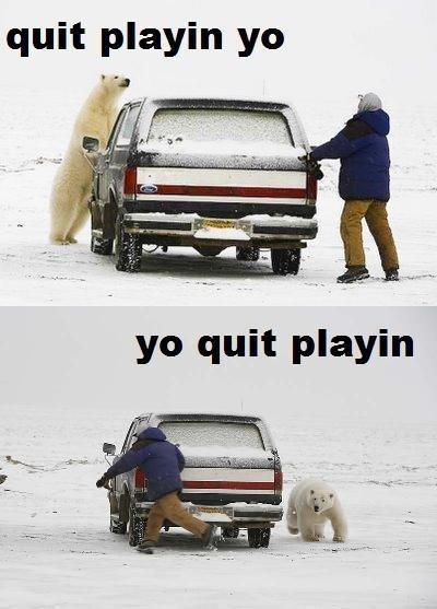 Hold Still. . quit playin yo. Tyrone the albino bear.