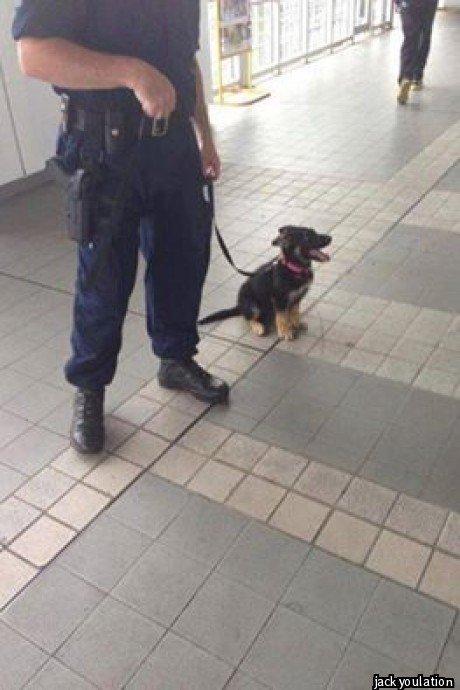 Hornsby Station police pup... Hornsby Station police pup...