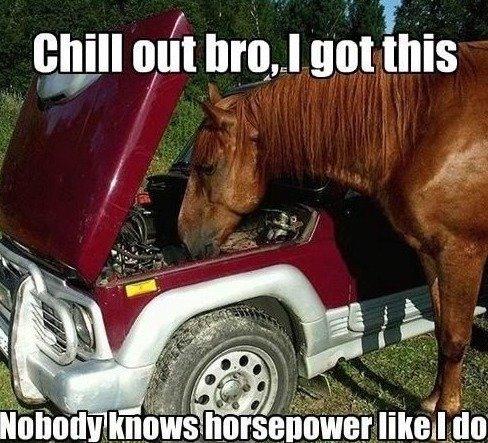 horsepower like a sarah jessica parker. . I iil! iial LI Blatt his
