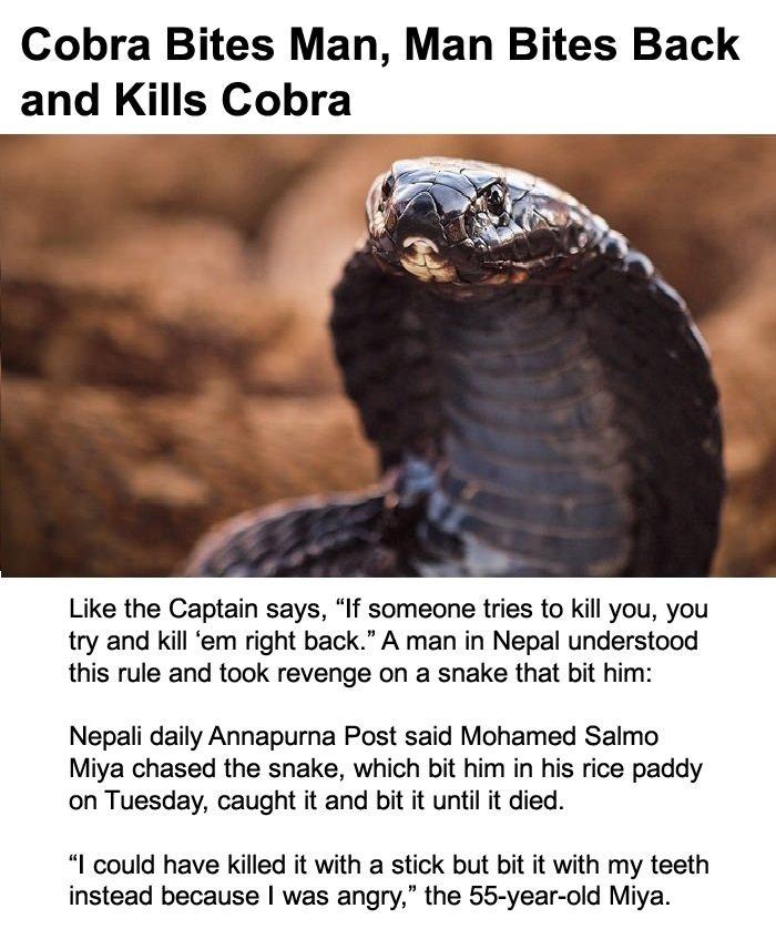 Killing Bites  Wikipedia
