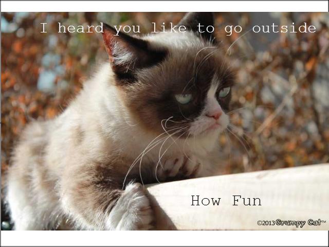 How fun.. NO!. grumpycat