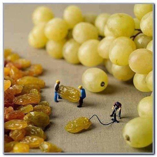 How grapes are made. .. how raisins are made