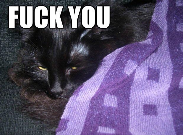 How I feel when my mom wakes me up. OC, made this picture of my cat half an hour ago... KATJEEEEEEEEEEEEEE
