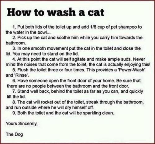 "How to wash a cat. No description needed. tthe"" tta_ Ritmo. Mina HUN no tags needed"