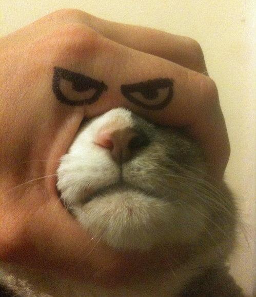 I am cat, fuck you. .. Fixed