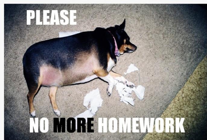 Please Do My Homework