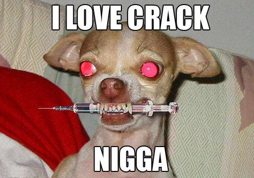 I. dis luvs crack (luvdacrack).. You don't shoot up crack you dumb . Crack Drugs puppies Puppy chiwawa Dog heroin needle meme junkie
