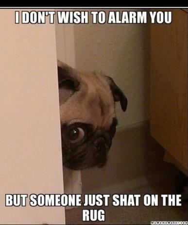 I don't wish to alarm you.... Pugs. BUG SOMEONE HIST SHIN ON THE TO man mu zee tags