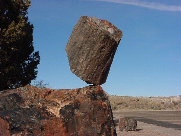I enjoy this rock. Dat rock.. Not a rock, petrified wood.