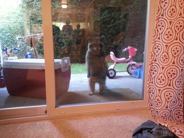 I heard you owe me money. Mr.Nook is not a patient man.. tom nook animal crossing Nintendo Raccoon