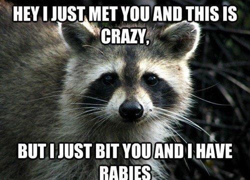 I just met yAAAAAA HE BIT ME. Damn coons........ HEY I JUST (ll.. You nun nus IS. ironic coon rabid