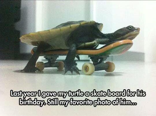 I like turtles. Not my turtle. l Ewan