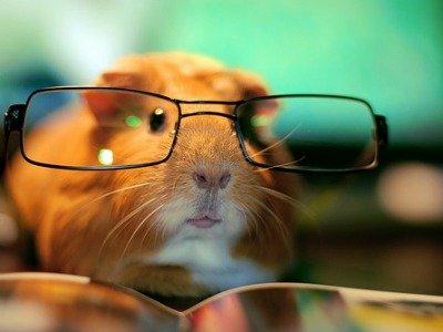 I'm a fucking normal guinea pig!. I'm a normal guinea pig.