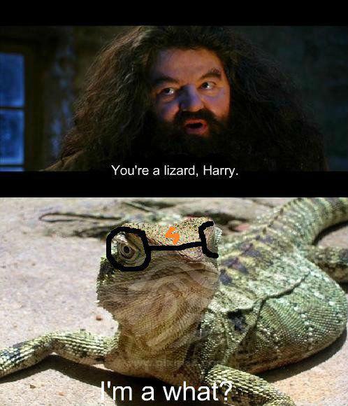 I'm a what?. a lizard. Harry. You' re a lizard