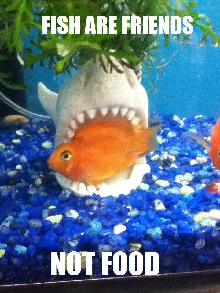 """I'mmmm gonna get cha. . FISH ABE FRIENDS """" Tutu If Fish meijers Nemo Shark near death"""
