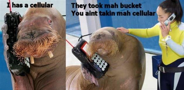 I has a cellular. I has a cellular.. i has a cellular