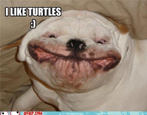 i Like Turtles Picture i Like Turtles