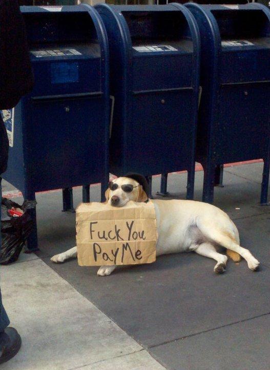 I laughed.. meep... Geico dog? funny dog