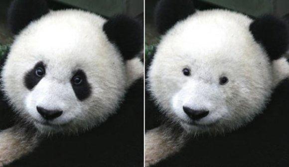 Importance of eye makeup. .. Tell me about it. Panda eye makeup importance