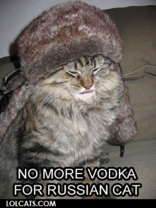Soviet cat on a snowy mission - Imgur
