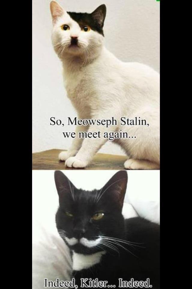 Indeed. . itm Stalin, I (llooll'