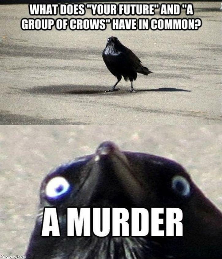 insanity crow. .