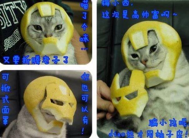 Iron Lemon Cat. Oh japan....
