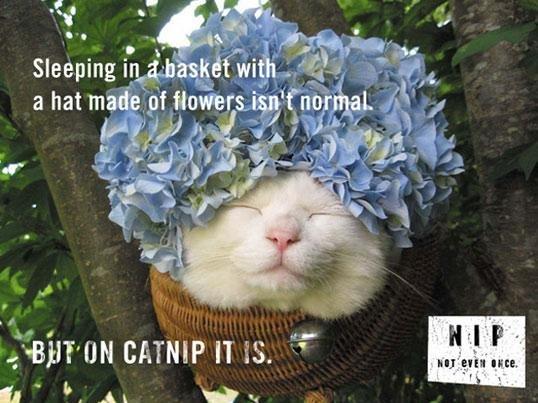 It's A Slippery Slope. . sis'. mhhhh catnip