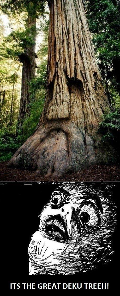 Its REAL!. . ITS THE GREAT DEKU TREE. FOLLOW THE YELLOW BRICK ROAD....to my wndowless van Zelda link Tree Deku