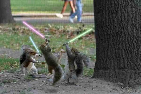 jedi squirrel. lol rate comment.
