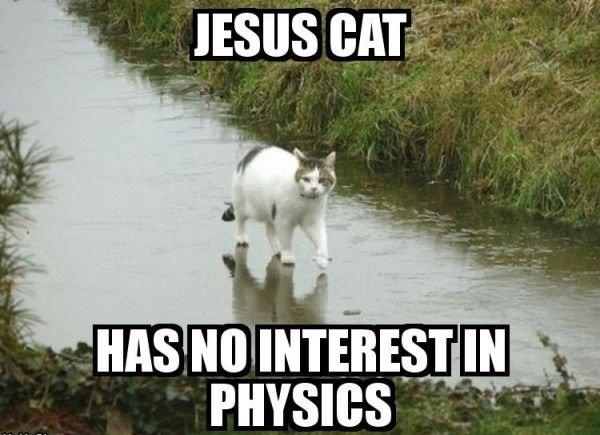 Jesus cat. more boredom enjoy peoples.. ail' ll